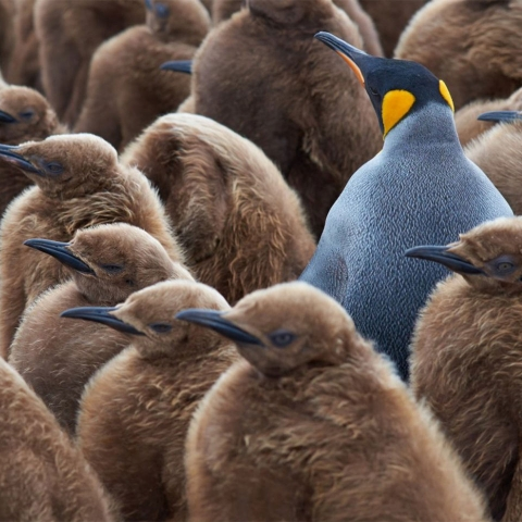 6 Uncommon Virtues That Make Great Leaders a Rare Breed